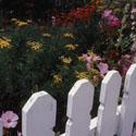 Cottage Picket Fence & Garden
