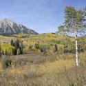 Gunnison National Forest Panorama